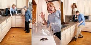 الحشرات الصغيرة في المطبخ