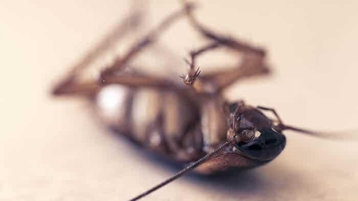 افضل مبيدات الصراصير